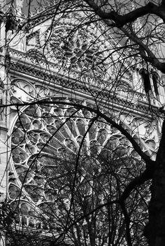 francoise-larouge:  francoise-larouge: Détail Notre Dame Photo ©30 ocobre2013- Françoise Larouge