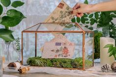 rose gold card box Terrarium Ideas, Planter Ideas, Glass Terrarium, Terrariums, Small Potted Plants, Thanks Card, Rose Gold Pink, Card Box Wedding, Congratulations Card