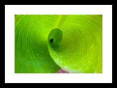 Banana Leaf Twirl - Frame