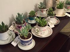 Succulents in teacups party favors for indoor garden party - Modern Succulent Party Favors, Garden Party Favors, Indoor Garden Party, Tea Party Favors, Garden Party Decorations, Succulent Bouquet, Wedding Favours, Wedding Reception, Wedding Decorations