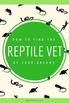 How to find a reptile vet who will actually take care of your pet's health