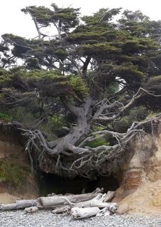 Tree Root Cave, Big Sur, California photo via shabbir