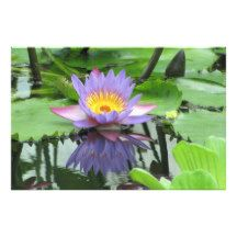 Lotus Flower Photo Art