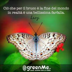 Ciò che per il bruco è la fine del mondo in realtà è una bellissima farfalla. - Laozi  http://www.greenme.it/