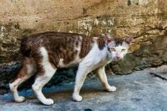 Ways Feral Cats Help the Ecosystem