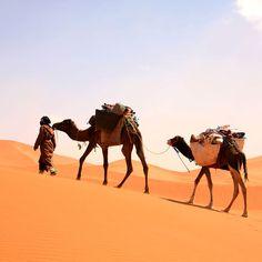 Désert de M'hamid dans le Sahara au Maroc #morocco #desert