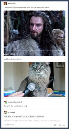 """This accurate comparison. 21 Pictures Only """"The Hobbit"""" Fans Will Think Are Funny Hobbit Quotes, Tolkien Quotes, J. R. R. Tolkien, Hobbit Funny, O Hobbit, Legolas, Gandalf, Baggins Bilbo, Thorin Oakenshield"""
