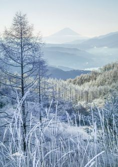 Snowy wilderness / mountains / forest