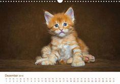 Kätzchen - CALVENDO Kalender - #katzen #kalender