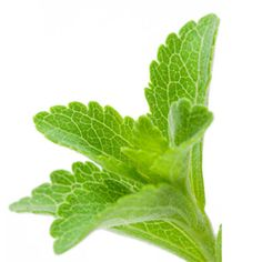 Big Market Research: Global Stevia Market to grow at a CAGR of 8.82% during the period 2016-2020