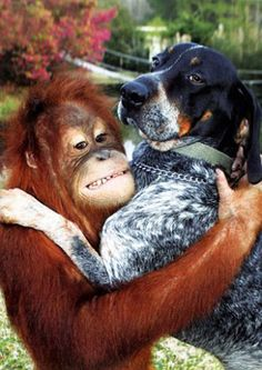 suryia and roscoe - Google Search