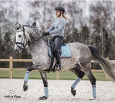 Baby Horses, Cute Horses, Pretty Horses, Horse Love, Beautiful Horses, Dapple Grey Horses, Gray Horse, Horse Photos, Horse Pictures