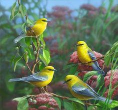 BIRD - KUŞ
