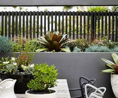A small yard shouldn't be uninspiring. Learn how to transform what little space you have into an urban oasis by getting on board with vertical gardens, climbing vines and potted feature plants. Small Courtyard Gardens, Small Gardens, Vertical Gardens, Patio Gardens, Backyard Ideas For Small Yards, Small Backyard Landscaping, Landscaping Ideas, Home Garden Design, Modern Garden Design