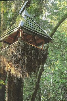 Surfass Treehouse It's that time of year to start building a treehouse for your children to play in during the summer or for yourself to get. Building A Treehouse, Tarzan And Jane, In The Tree, Tree Houses, Architecture, House Styles, Plants, Boards, Trees