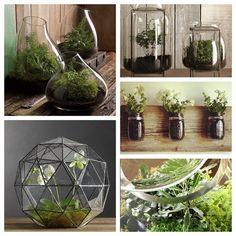 Terrarium DIY #Ideas Verdes #ÍntimaHogarMx