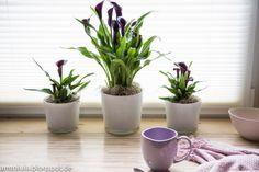 Die Calla spricht für sich #pflanzenfreude #calla #plant #pflanze #indoor