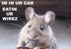 How to remove mouse nest from car ventilation system