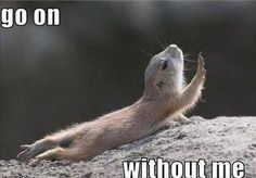 This how I feel after running for like 30 seconds...