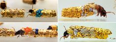 Artist Hubert Duprat Collaborates with Caddisfly Larvae as They Build Aquatic Cocoons from Gold and Pearls  http://www.thisiscolossal.com/2014/07/hubert-duprat-caddisflies/