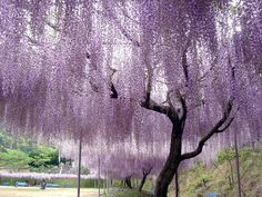 I want to lay under this tree and dream.