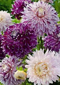 outdoor gardening  https://ru.pinterest.com/wgjcr357/outdoor-gardening/?utm_campaign=activity&e_t=053dba24e4c745ebb142dfb02c461e1c&utm_medium=2003&utm_source=31&utm_content=367113875814094971