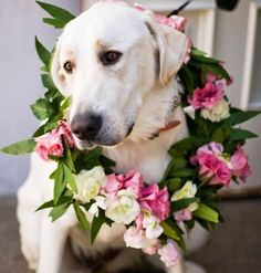 White Labrador wedding dog Toni Kami ❀Flowers in their coats❀