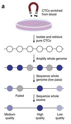 Sequencing Circulating Tumor Cell Exomes