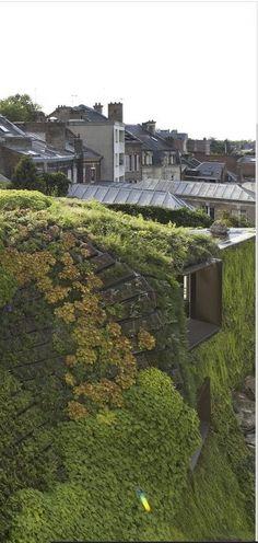 green roof and vertical garden