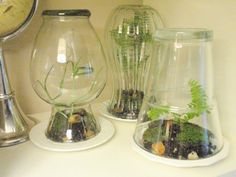 glass vase diy terrariums