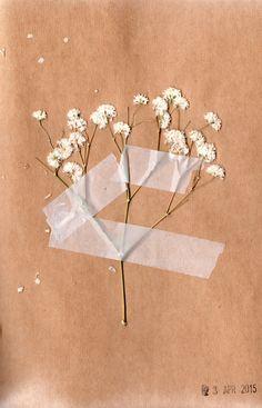 Ellen Jakeman // dried gypsophilias in my visual journal, 2015 Cream Aesthetic, Classy Aesthetic, Brown Aesthetic, Aesthetic Colors, Flower Aesthetic, Aesthetic Pictures, Aesthetic Pastel Wallpaper, Aesthetic Wallpapers, Fond Design