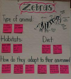 Mrs Jump's class: Zoo Unit Zebras