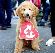 """Add a """"TY"""" heart to dog collar and they are a """"beanie baby"""""""