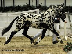 A list of rare and beautiful horses.