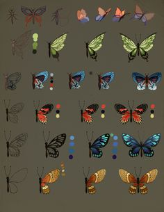 How To Draw Butterfly by jiuge.deviantart.com on @DeviantArt