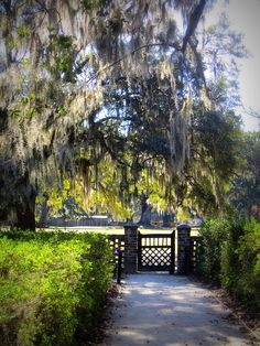 Middleton Place. - I'll forever remember my husband taking a million pictures through this gate because I kept bombing most of them<3