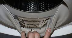 Anchela lavatriceha bisogno di una pulizia e manutenzione regolare.