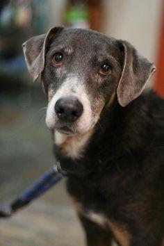 Zorro Age : 7 years Breed : Mexican Special Location: Edmonton Intake: January 2013 Animal Rescue, January, Mexican, Age, Animals, Animais, Animales, Animaux, Animal Welfare