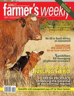 10 October: Beef Shorthorn Unsung Hero, Worlds Largest, Farmer, October, Beef, Meat, Ox, Ground Beef, Steak