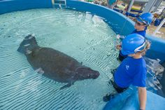 Find out more about how SeaWorld Orlando helps Florida's manatees