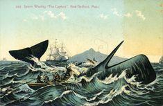 History Bytes: DeBlois Whaling Captain | Newport Historical Society