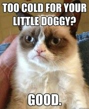 These are the Grumpy Cat memes I have been saving for no other reason than to laugh when I get grumpy. I mean, isn't that what Grumpy Cat is all about? Grumpy Cat Quotes, Funny Grumpy Cat Memes, Funny Animal Memes, Animal Quotes, Funny Animal Pictures, Funny Cats, Funny Jokes, Funny Animals, Grumpy Kitty