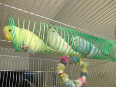 diy budgie toys - Google Search