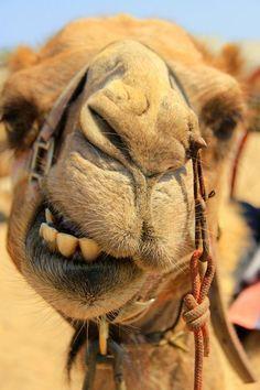 Sand dunes, camel trekking, and chameleons in the Namib Desert