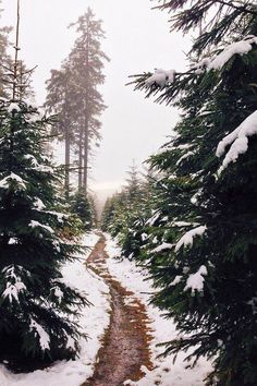 Winter forest in snow Winter Szenen, Winter Time, Winter Christmas, Merry Christmas, Beautiful World, Beautiful Places, Winter Beauty, To Infinity And Beyond, Adventure Is Out There