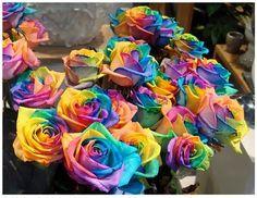 Regenboog rozen
