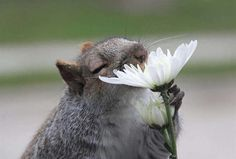 How cute are these creatures who stopped to smell the roses?
