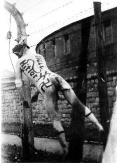 Маунтхаузен был освобождён американскими войсками 5 мая 1945 года, но бессменного коменданта концлагеря Франца Цирайса нашли только через двадцать дней — в его альпийском охотничьем домике. При задержании штандартенфюрера СС ранили, а на лечение привезли в лагерный госпиталь. Там он скоро умер якобы от полученного ранения, но при вероятном содействии персонала. Труп Цирайса на проволочном ограждении Маунтхаузена повесили его бывшие узники.
