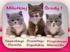 Dni tygodnia Cats, Animals, Author, Wednesday, Gatos, Animales, Animaux, Animal, Cat