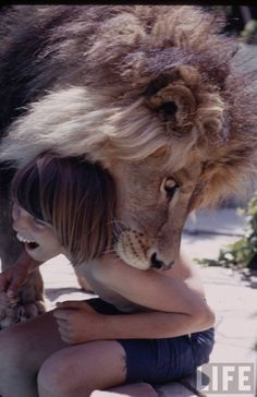 Lion in the house, 1970